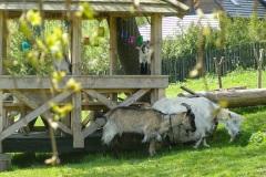 Strzebowiska Bieszczady Wysokie : Stajnia Batiara prawdziwa agroturystyka: konie, noclegi, kwatery, jazda konna